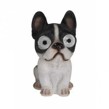 Tuinbeeld franse bulldog hond solar verlichting